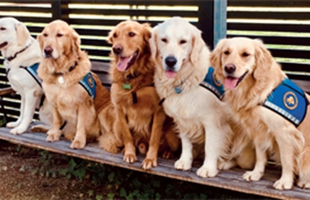 Billede af servicehunde på række