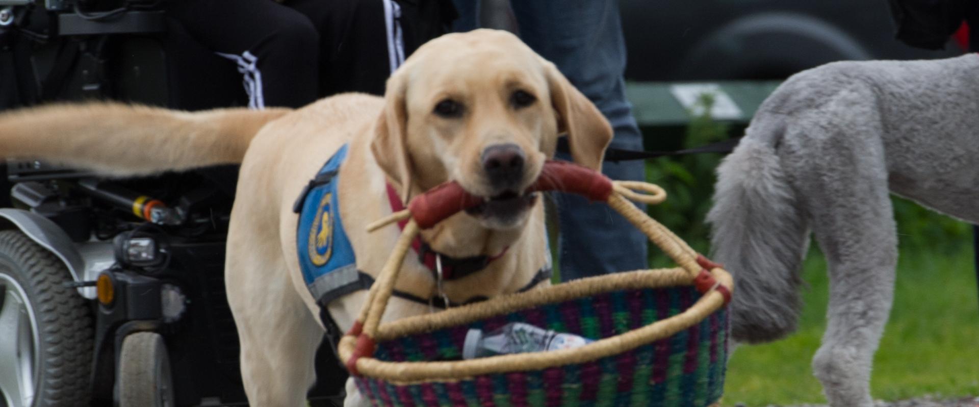 Billede af hund der bærer kurv