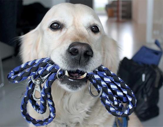 Billede af hund med hundesnor