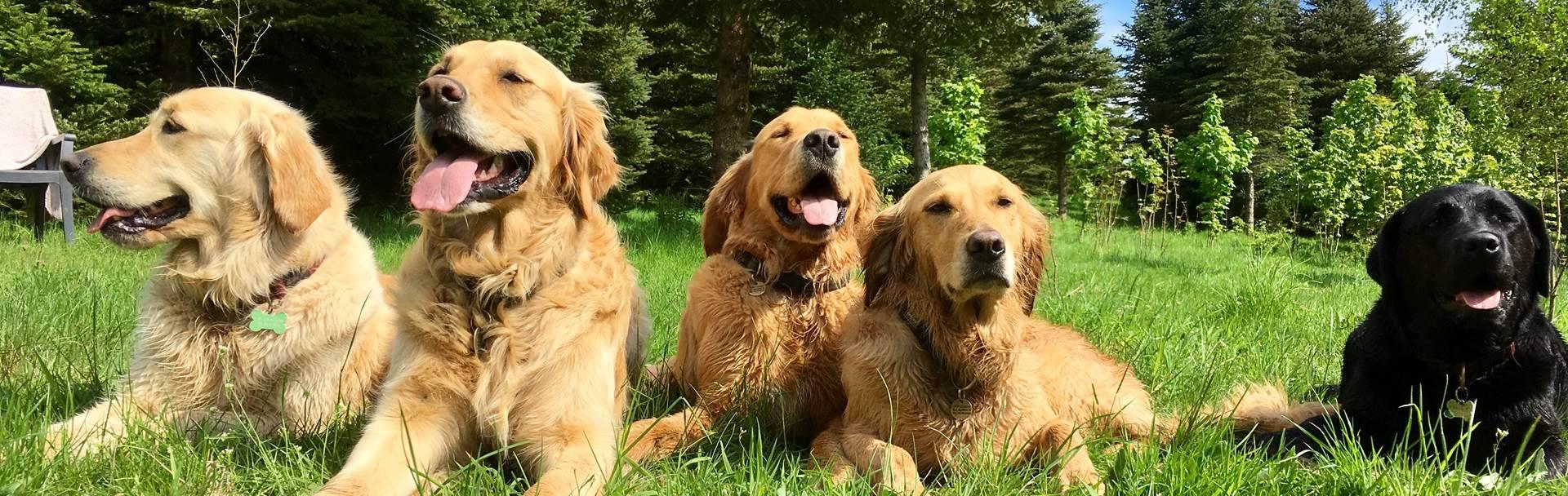 Hunde I Specialtræning