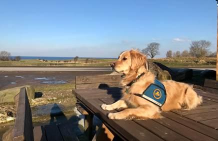 Billede af hund der ligger på bænk