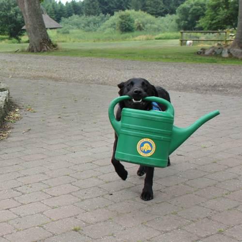 Hund Med Vandkande