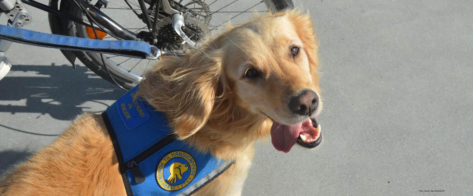 Billede af hund fra Dog a thon