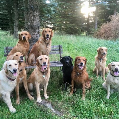 Billede af hunde på bænk