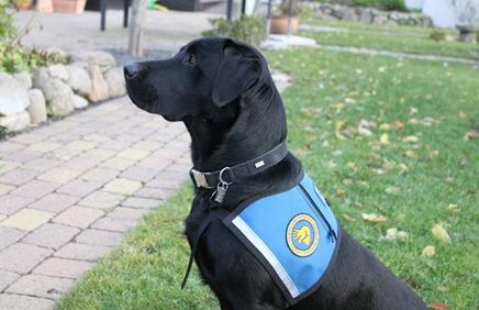 Billede af sort hund med vest
